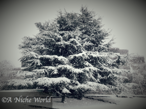 WINTER WONDERLAND: SNOW IN ZURICH