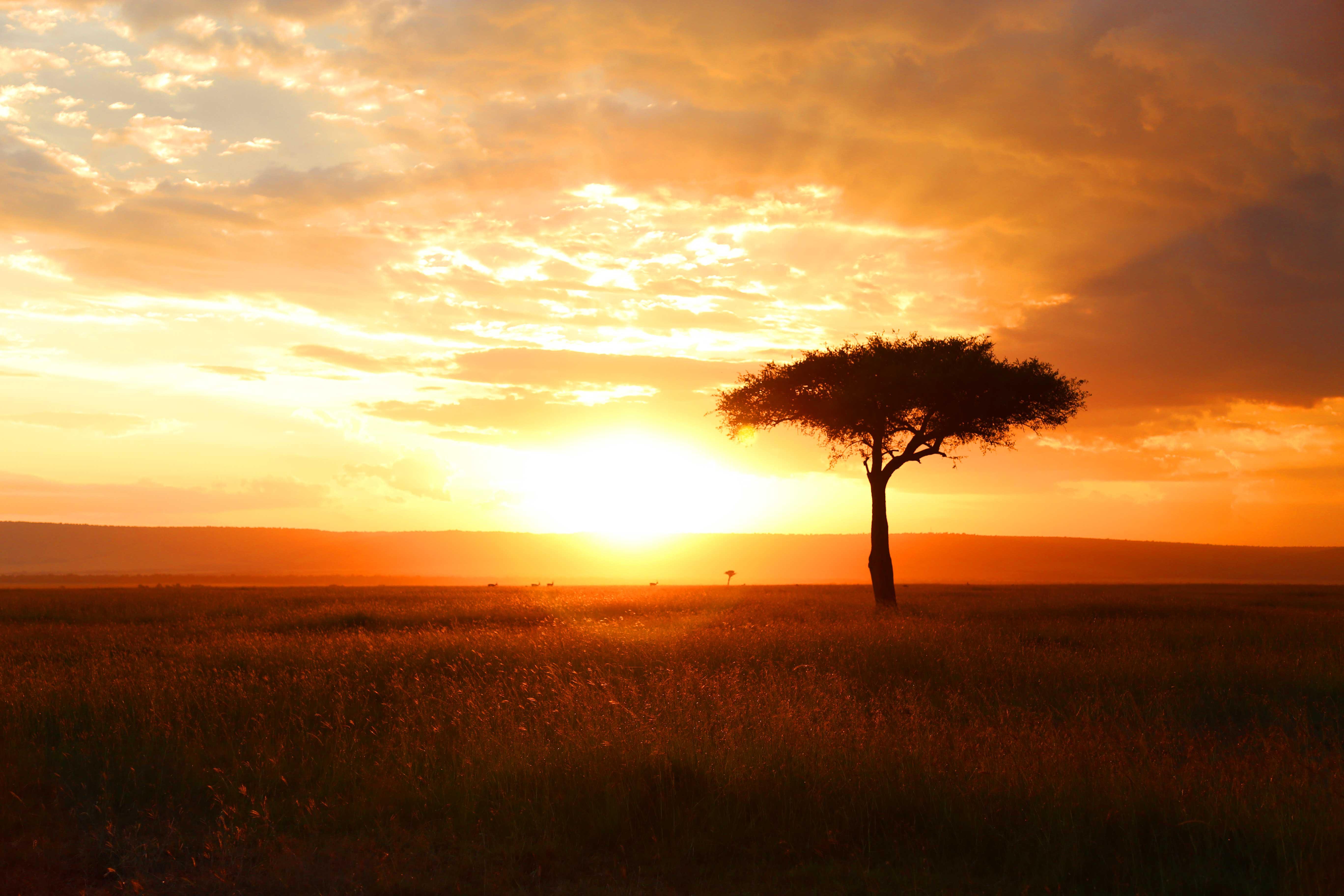 Masai Mara Sunset Worlds Best Safari Giraffe Long Neck Wild Lion March Pride Cheetah