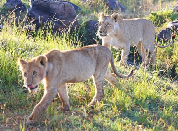 Masai-Mara27