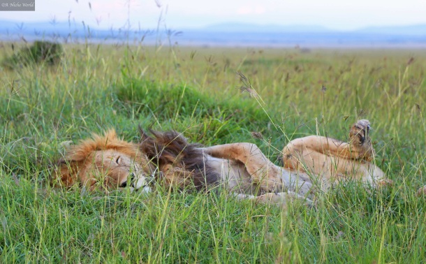 """""""Kenya"""" """"Masai Mara"""" """"African tribe"""" """"tribe"""" """"Masai tribe"""" """"Horn of Africa"""" """"east Africa"""" """"smile"""" """"beautiful smile"""" """"beauty"""" """"portrait"""" """"travel"""" """"travel photography"""" """"portrait photography"""" """"photography"""" """"beauty"""" """"nature"""" People"""" """"culture"""""""