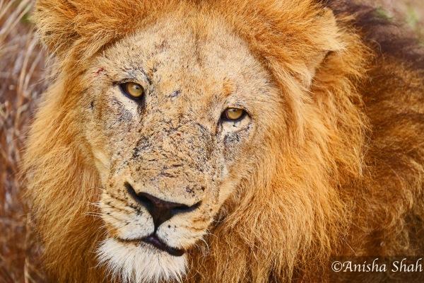 Safari33_watermarked