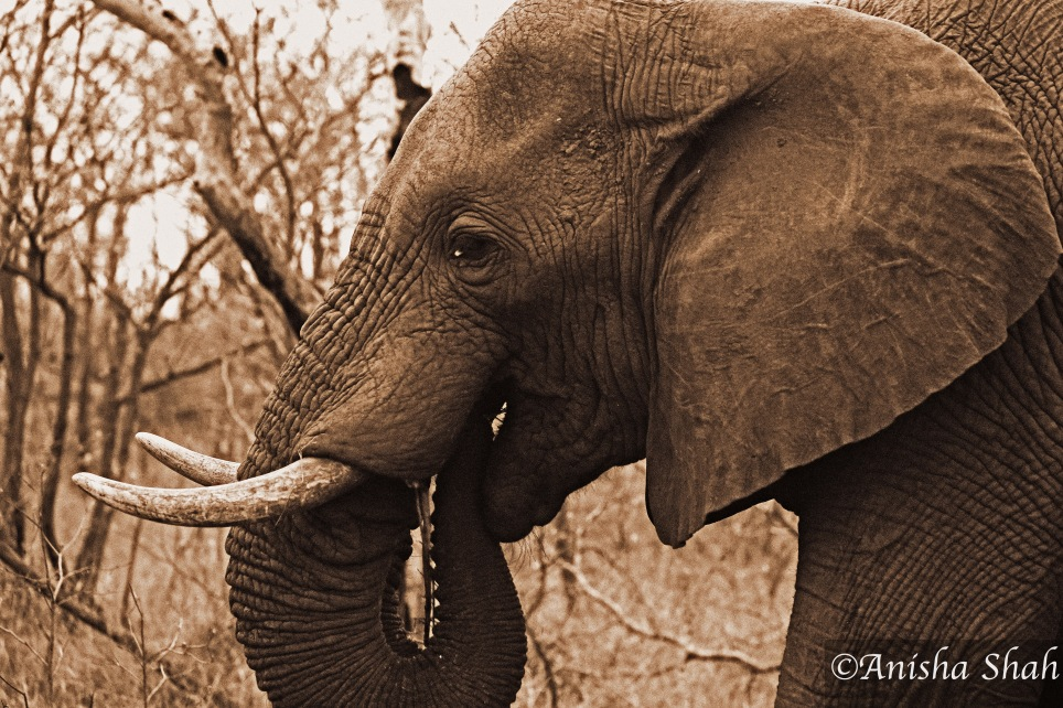 elephant, leopard, Africa, safari, South Africa, Kirkmans Camp, &Beyond,  wildlife, nature, travel