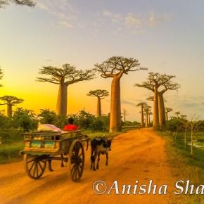 Madagascar Travel – Need toKnow