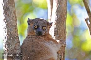 Madagascar's Lemurs – Looking forLemurs!