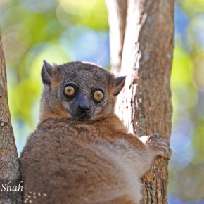 Madagascar's Lemurs – Looking for Lemurs!
