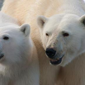 Arctic Expedition – Preparation for Polarexplorations!