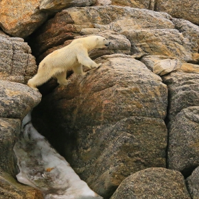 Arctic Svalbard – PolarWildlife
